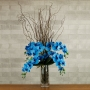 Haste de Orquídea Phalaenopsis X7 Flores X5 Botões 70cm Azul
