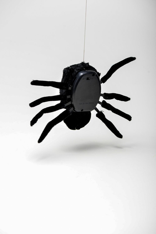 Aranha Maluca