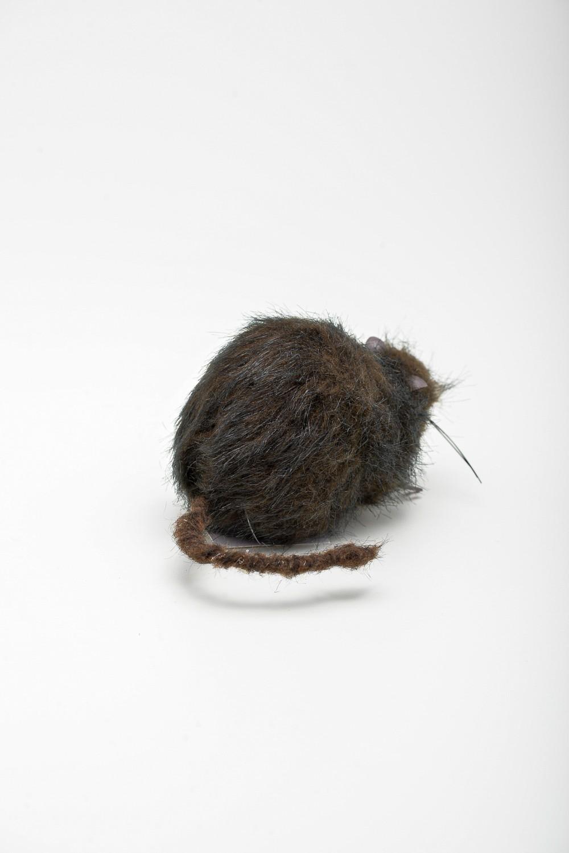 Rato Dentuço