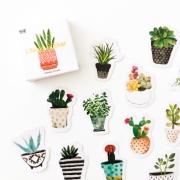 Caixinha Plantas