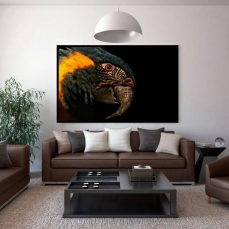 Quadro decorativo Para Sala - Arara - 110x70cm