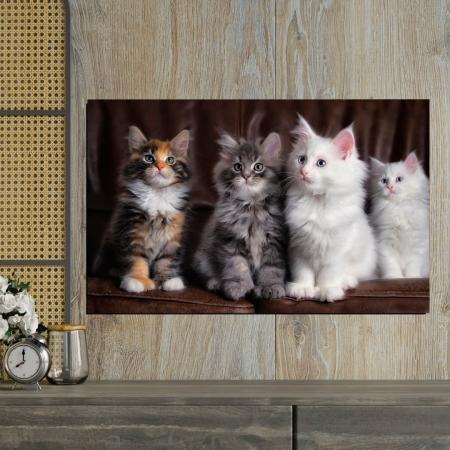 Quadro Decorativo Para Sala Quatro Gatos 90x55cm