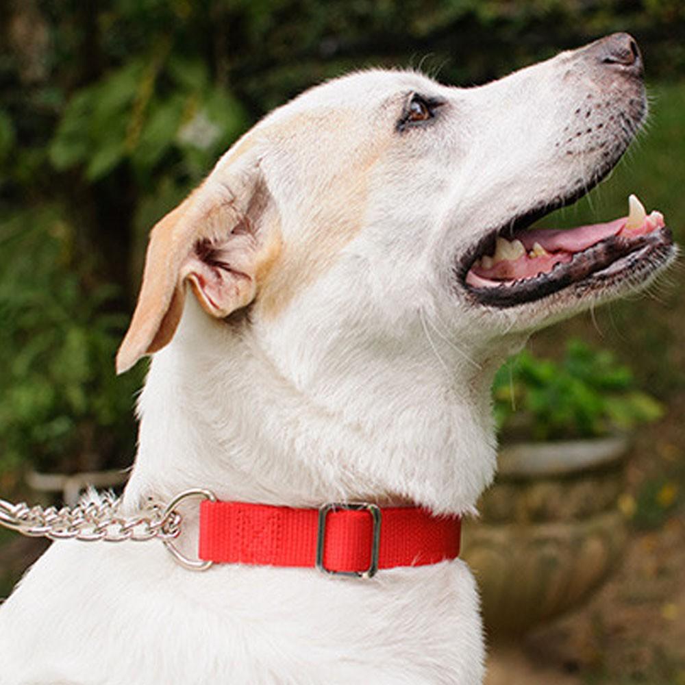 Kit Coleira Corrente Metal Cachorro Caes Semi Enforcador Guia Passeio Pet Adestramento