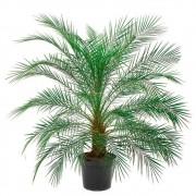 Palmeira Fênix - Phoenix roebelenii