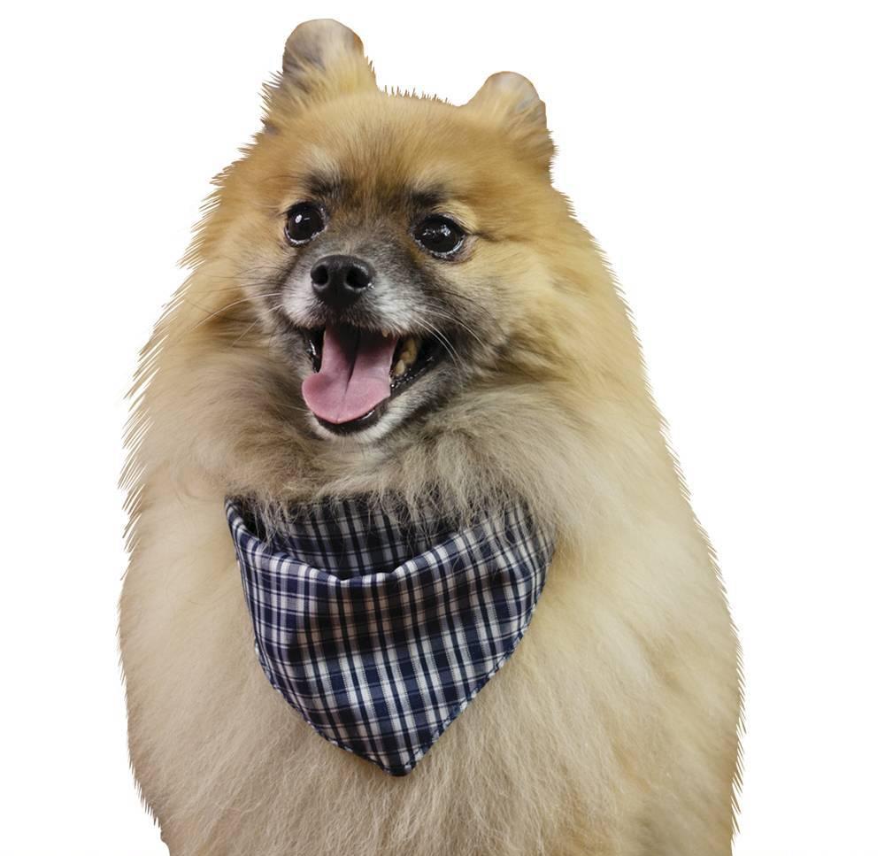 Bandana Xadrez Azul Marinho e Preto para cachorros e gatos, Tam P ao G