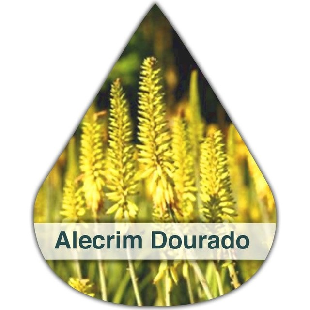 Essência Silver Aroma Alecrim Dourado DM