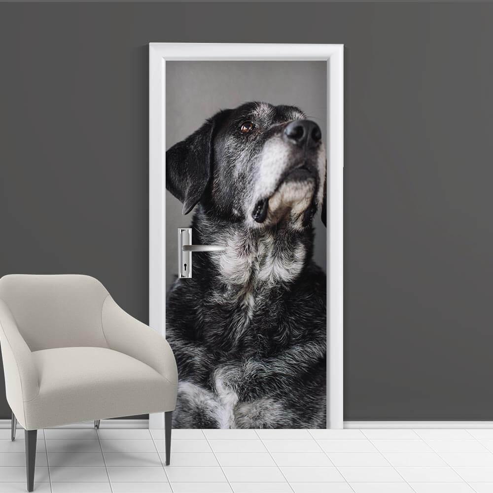 Adesivo de Porta Cachorro 2