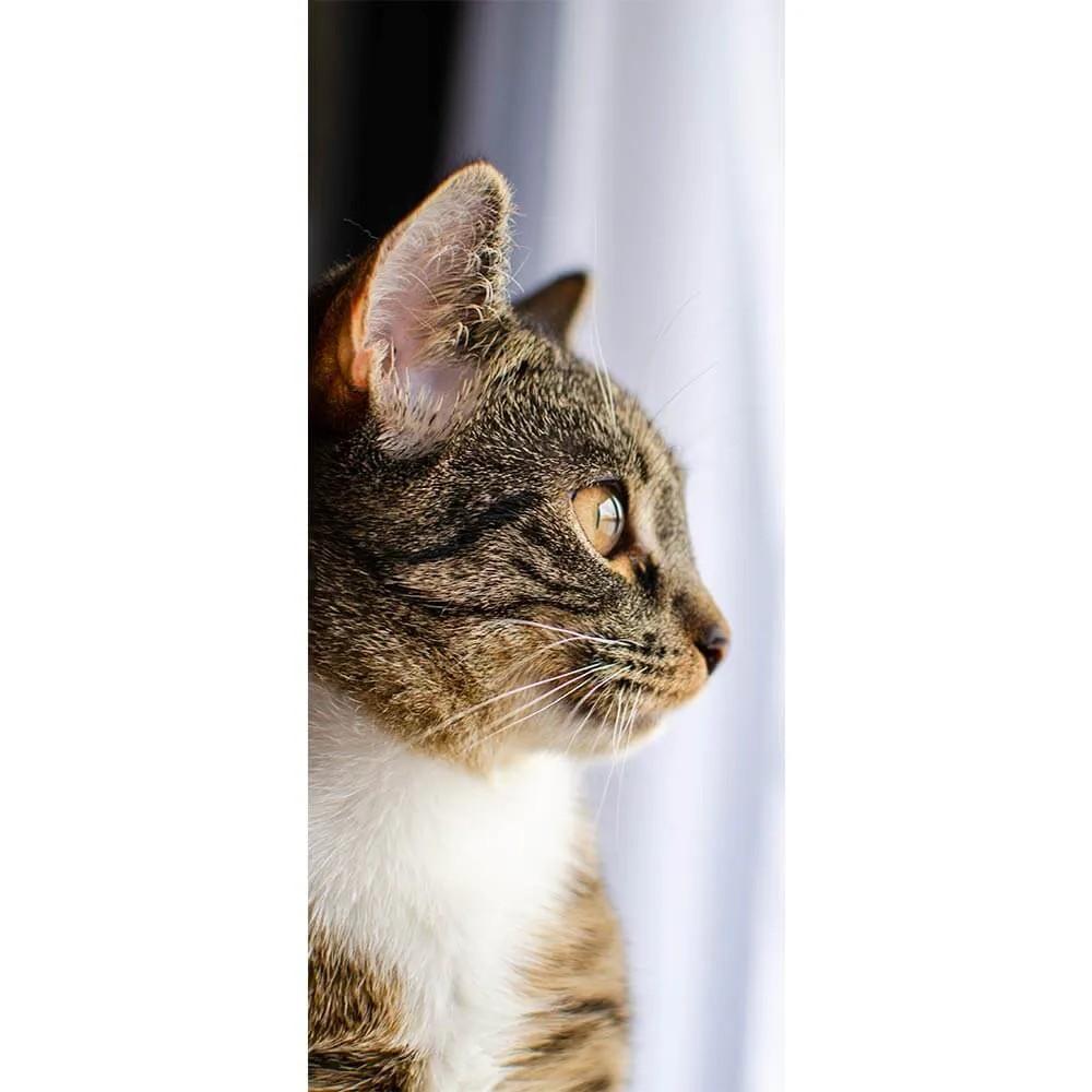 Adesivo de Porta Gato 1