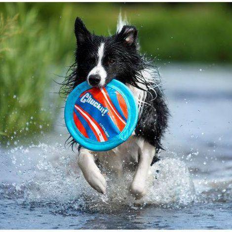 Frisbee Dog - Disco Lite Flight - Chuckit