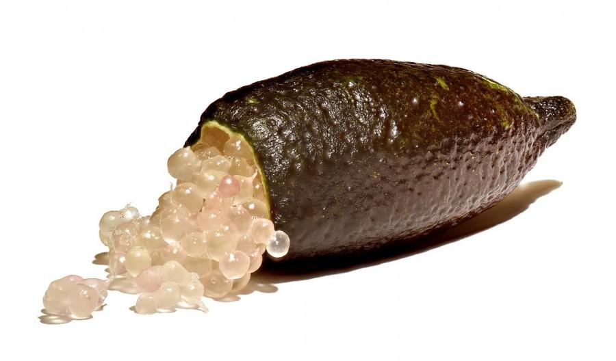 Muda de Limão Caviar (LANÇAMENTO)!
