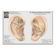 Mapa Auriculoterapia dos Micromeridianos
