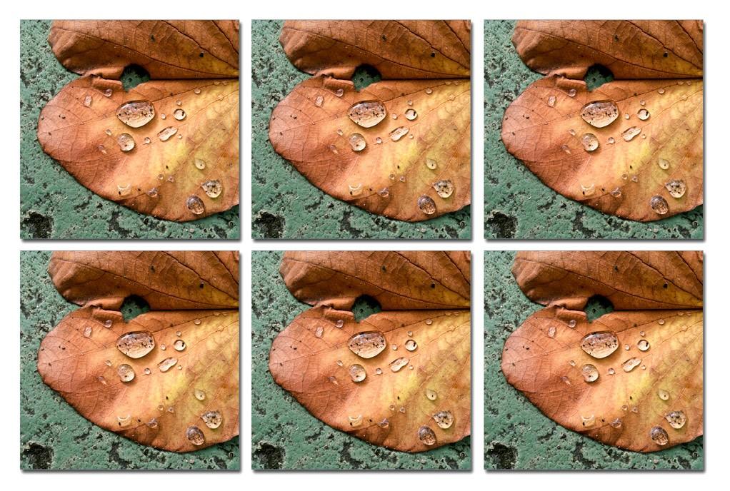 Outono - Conjunto com 6 porta copos