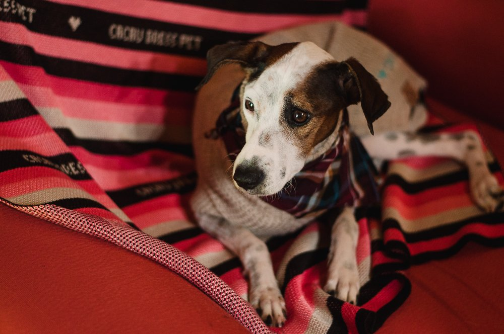 Cobertor Framboesa