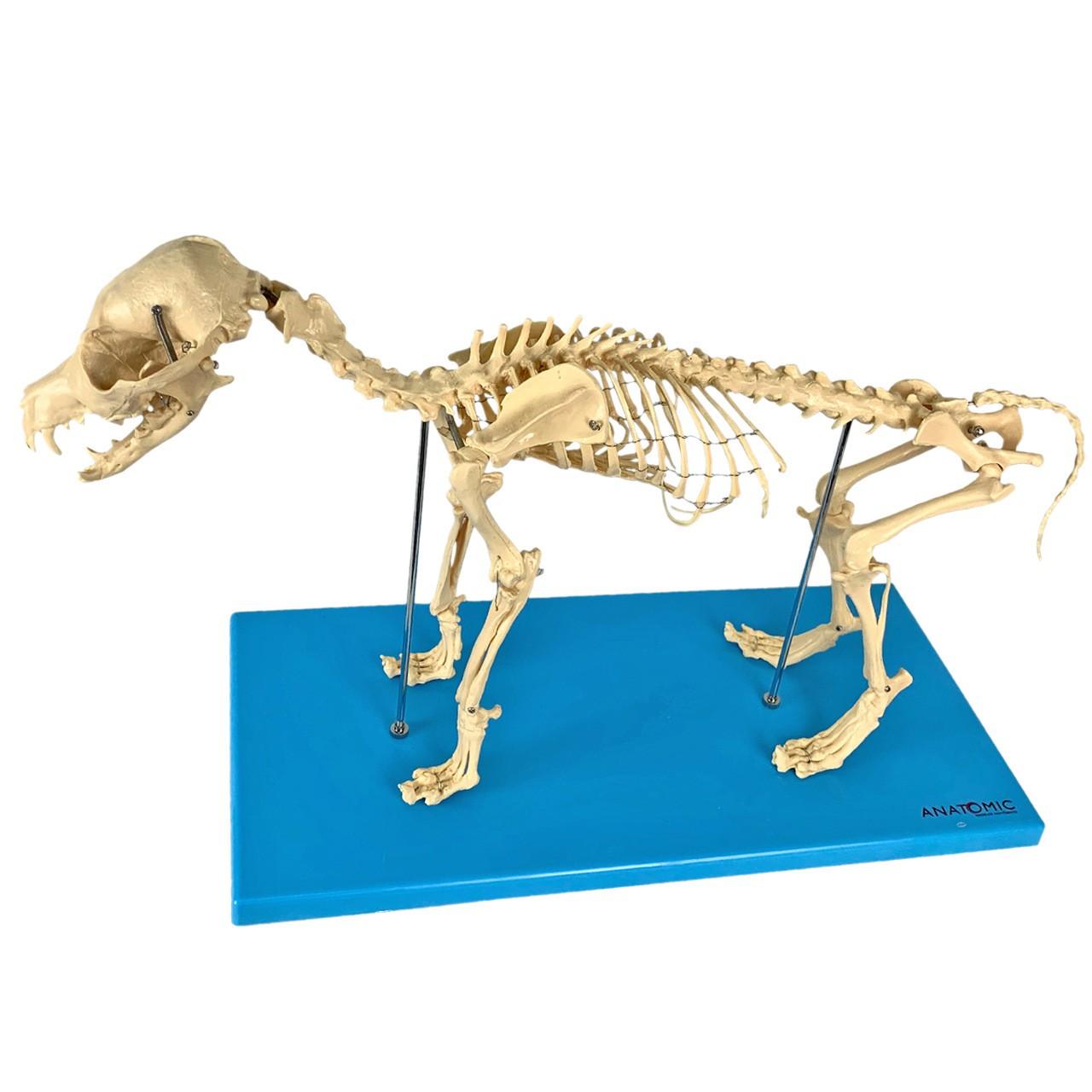 Esqueleto de Cachorro em Resina