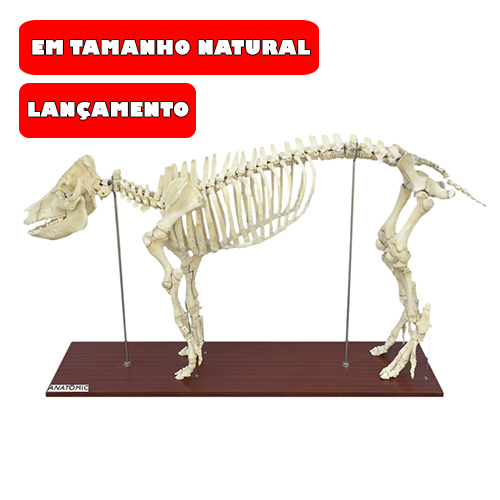 Esqueleto do Porco em Tamanho Natural