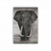 Quadro Elefante Preto e Branco Savana - Tela Única