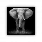 Quadro Elefante Savana Quadrado - Tela Única