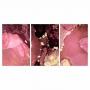 Quadro Abstrato Mármore Rosa Uva Bordo - Kit 3 telas