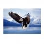 Quadro Águia Voando Majestosa - Tela Única