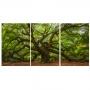 Quadro  Árvore Grande Luxo - Kit 3 telas