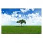 Quadro Árvore Natureza Green - Tela Única
