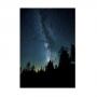 Quadro Árvores Noite Estrelada Vertical - Tela Única