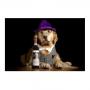 Quadro Cachorro Vinho Wine  - Tela Única