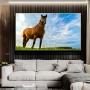 Quadro Cavalo Céu Azul - Tela Única