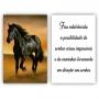 Quadro Cavalo Liberdade Estabelecida -  Kit 2 telas