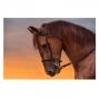 Quadro Cavalo Perfil Céu - Tela Única