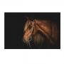 Quadro Cavalo Perfil Fundo Preto- Tela Única
