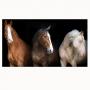 Quadro Cavalos Fundo Preto - Tela Única