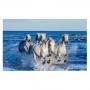 Quadro Cavalos Galopando no Mar - Tela Única