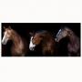 Quadro Cavalos Luxo Fundo Preto - Tela Única