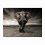 Quadro Elefante Savana Preto e Branco Intense - Tela Única