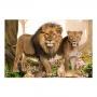Quadro Família Leão 3 filhotes Floresta - Tela Única