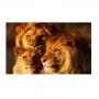 Quadro Família Leão , leoa e 1 filhote Horizontal - Tela Única