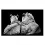 Quadro Família Leão , leoa e 1 filhote - Tela Única