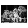 Quadro Família Leão Luxo Preto e Branco - Tela Única