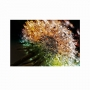 Quadro Flores Dente de Leão Multi Cores - Tela Única