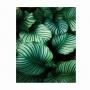 Quadro Folhas Natureza Luxo 1 - Tela Única