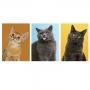 Quadro Gatos Coloridos Divertidos - Kit 3 telas