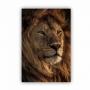 Quadro  Leão Africano - Tela Única