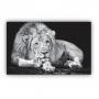 Quadro Leão Majestoso Preto e Branco - Tela Única