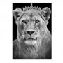 Quadro Leoa Coroa Rainha Vertical - Tela Única