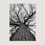 Quadro Natureza Árvores Folhas Secas Calmaria - Tela Única