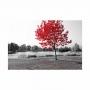 Quadro Paisagem Cinza com Árvore Vermelha - Tela Única
