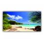Quadro Praia Tropical Folhas - Tela Única