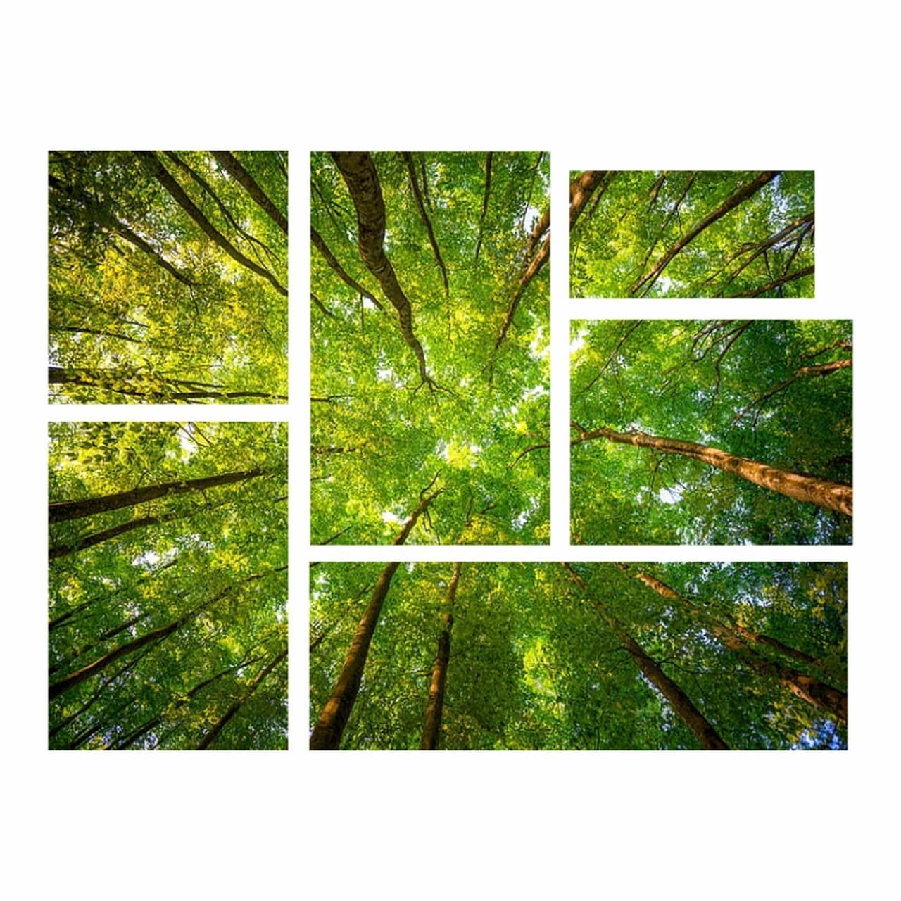 Kit de Quadros Árvores Luxo  - Kit 6 telas