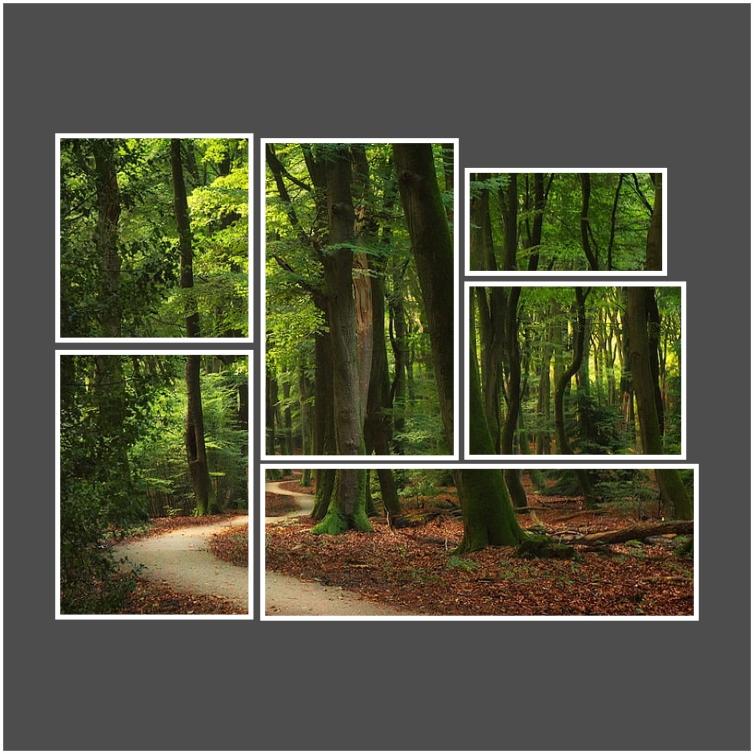 Kit de Quadros Caminho Entre Árvores  - Kit 6 telas